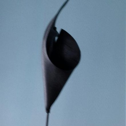 fleur de caoutchou sur un fond bleu