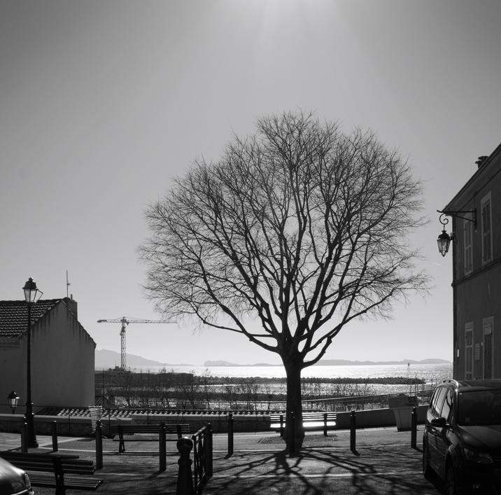 Arbre à contre jour : photo noir et blanc, d'une silhouette d'arbre sans feuilles à contre jour.