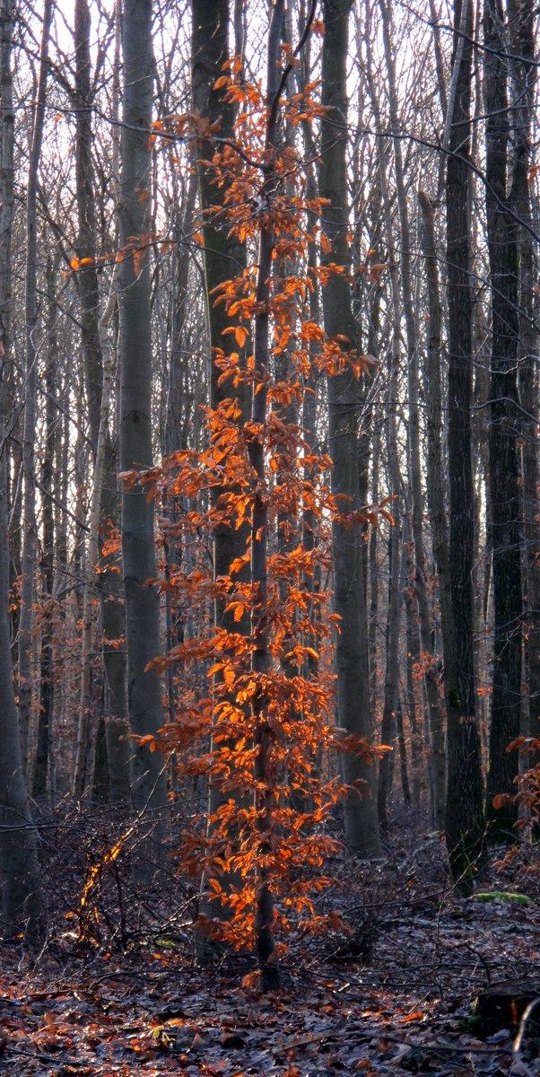 Un arbre garde ses feuilles oranges au milieu d'arbres nus