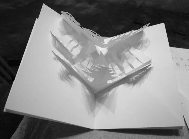 Arbres et voitures de papiers vu du ciel