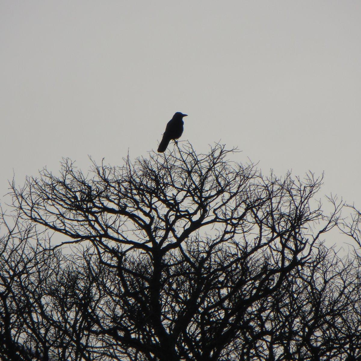 un oiseau perché au sommet de la canopée