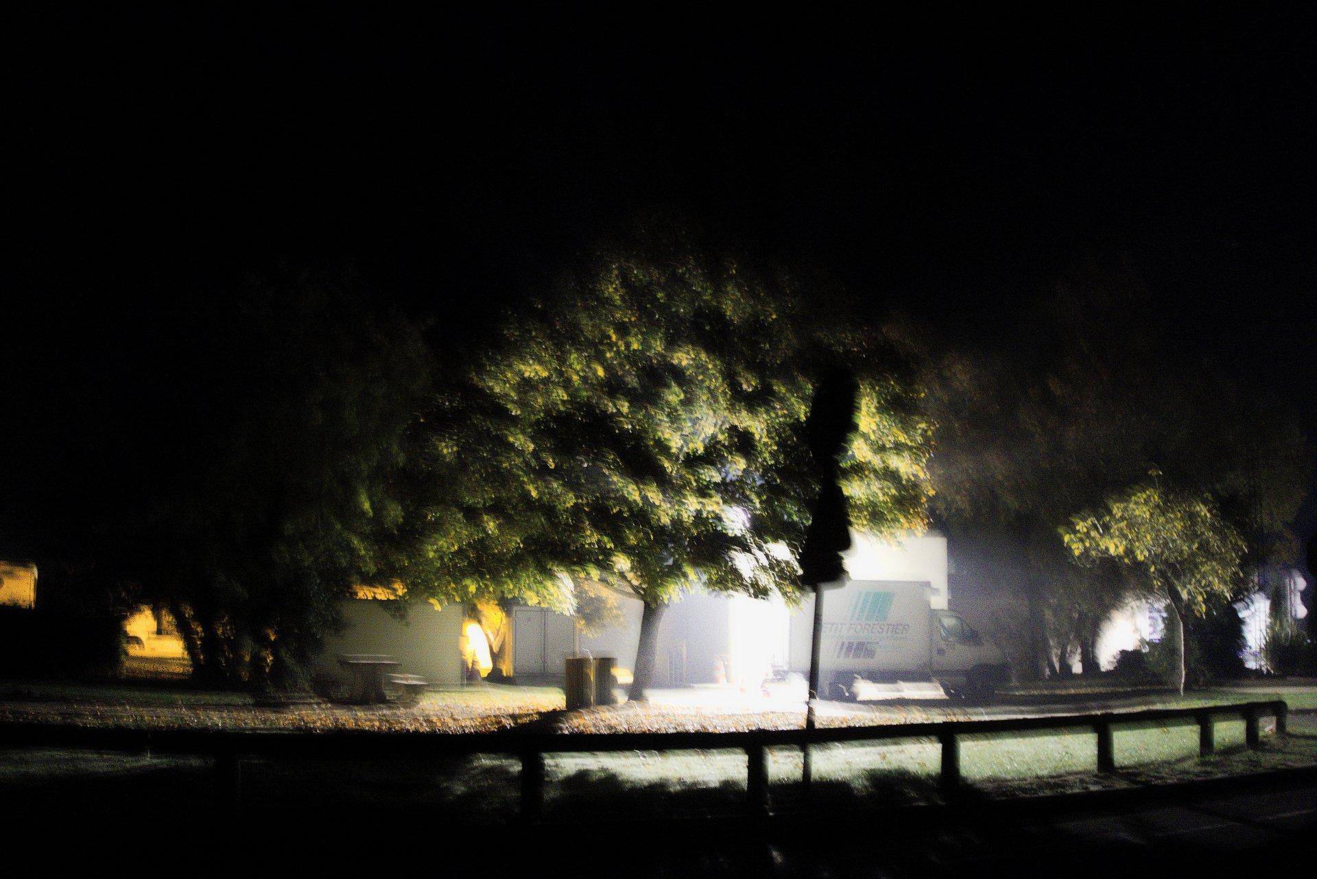 arbre à contre jour d'un lampadaire