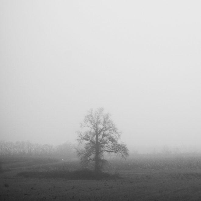 chêne d'hiver dans le brouillard