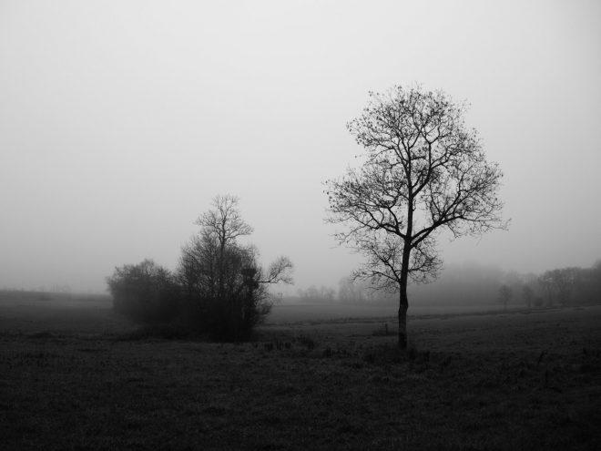 deux arbres contrastés sur fond de brouillard