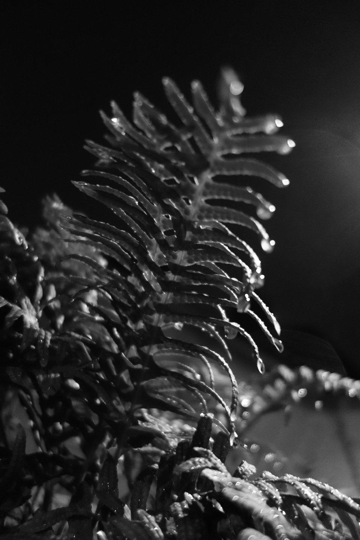 feuille prise en photo de nuit en contre plongée